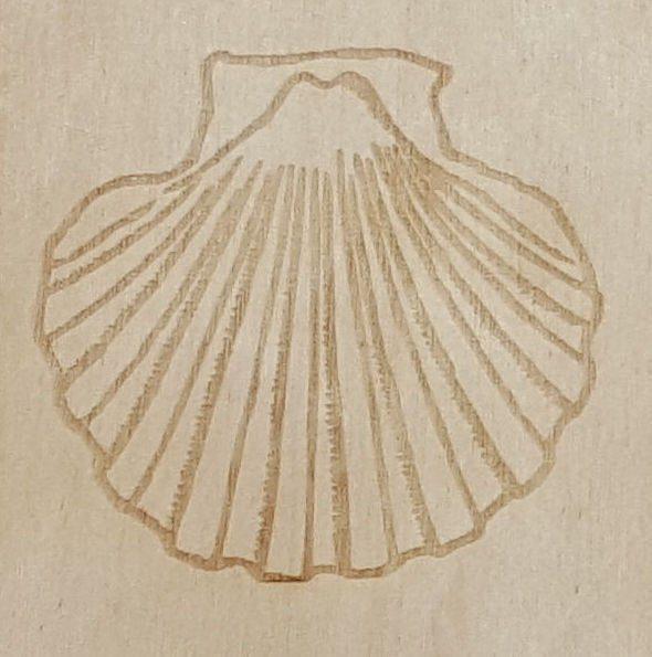 Clam Shell Birchbarn Designs